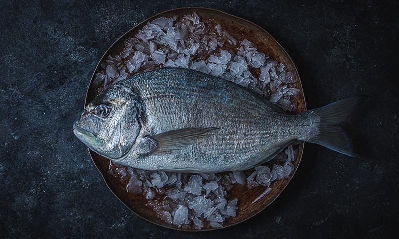 Pescado fresco online